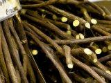 kořen lékořice